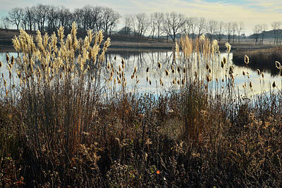 Photograph - Pampas Grass Line Lakewood Pond On A Calm Morning by Ray Mathis