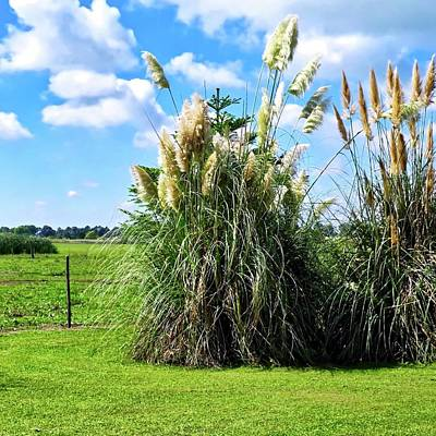 Photograph - Pampas Grass On The Pampas by Kirsten Giving