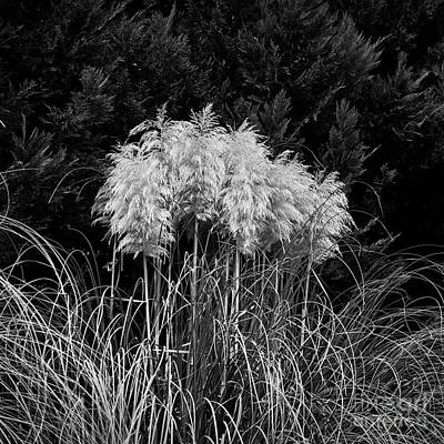 Photograph - Pampas by Patrick M Lynch