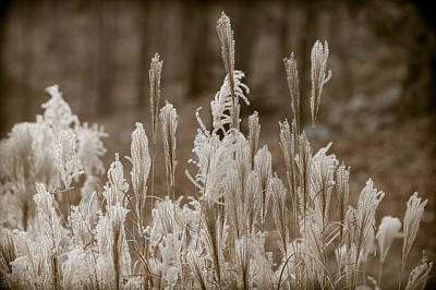 Photograph - Pampas by Sara Hudock
