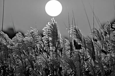Photograph - Pampas Sunrise Bw by Bonfire Photography