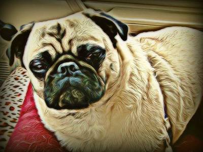 Digital Art - Pampered Pug by Raven Hannah