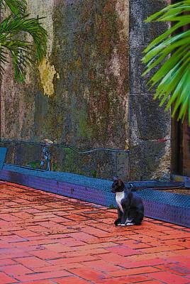 Panama Cat Art Print by Robert Boyette