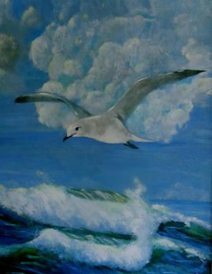 Panama City Seagull Art Print