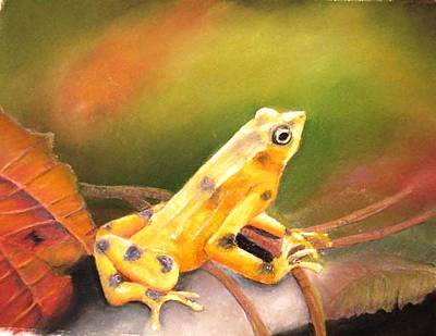Painting - Panamenian Golden Frog by Ceci Watson