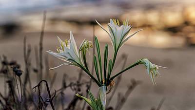 Photograph - Pancratium Maritimum L. by Uri Baruch