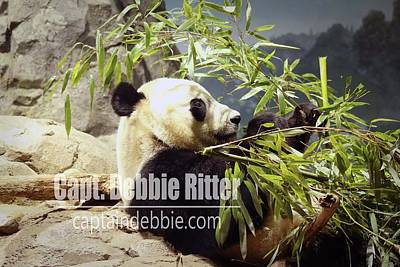 Photograph - Panda 6072 by Captain Debbie Ritter