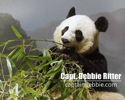 Photograph - Panda 6227 by Captain Debbie Ritter