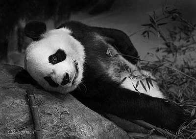 Photograph - Panda Bear by CR Courson