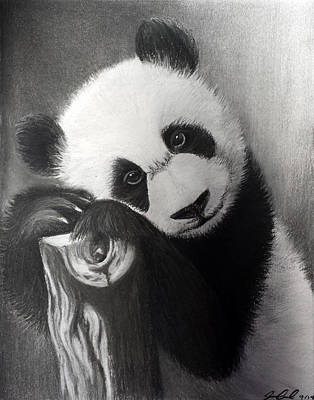 Drawing - Panda Bear by Joanna Aud