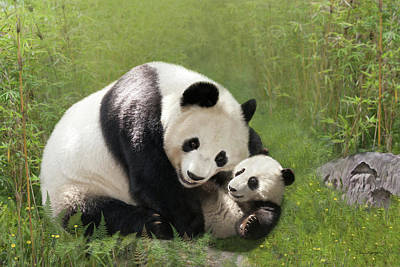 Digital Art - Panda Bears by Thanh Thuy Nguyen