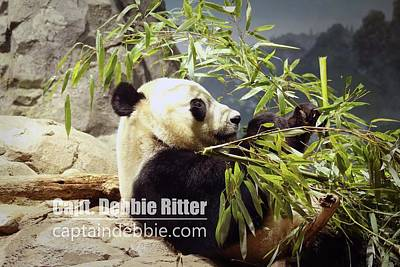 Photograph - Panda Bei Bei 6072 by Captain Debbie Ritter