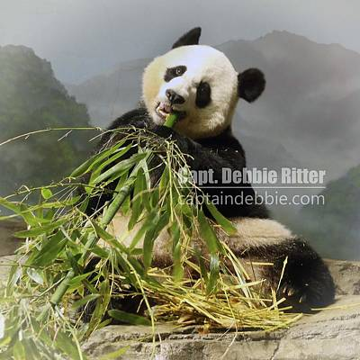 Photograph - Panda Mei Xiang 6072 by Captain Debbie Ritter