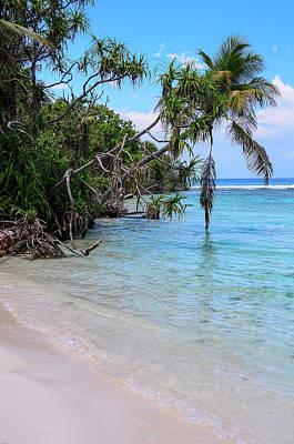 Photograph - Pandanus Trees On Tropical Beach by Jenny Rainbow