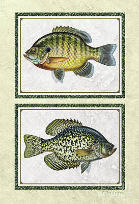 Painting - Panfish Id by Jon Q Wright