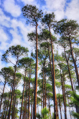 Art Print featuring the photograph Panhandle Pines by Mel Steinhauer