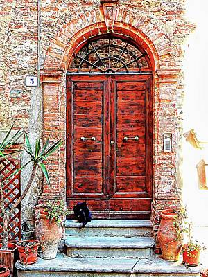 Photograph - Panicale Cat In Doorway by Dorothy Berry-Lound