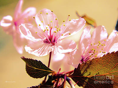 Photograph - Panoplia Floral by Alfonso Garcia