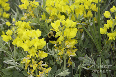 Photograph - Panorama Hills Bee Photo by Donna Munro