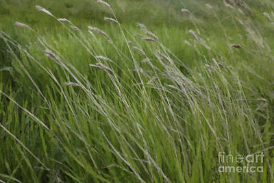 Photograph - Panorama Hills Bluff Grasses by Donna Munro