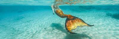 Mermaid Photograph - Panorama Mermaid by Leonardo Dale