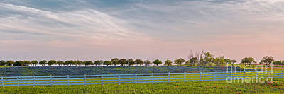 Prairie Sunset Photograph - Panorama Of A Bluebonnet Field In Chappell Hill Washington County - Brenham Texas by Silvio Ligutti