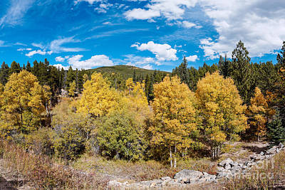 Photograph - Panorama Of Fall Foliage Aspens In Colorado - Arapaho National Forest - Peak To Peak Highway by Silvio Ligutti