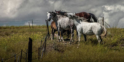 Photograph - Panorama Of Western Horses By The Pasture Fence by Randall Nyhof
