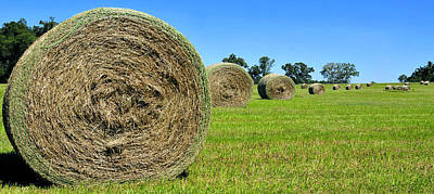 Photograph - Panoramic Hay Bails by David Lee Thompson
