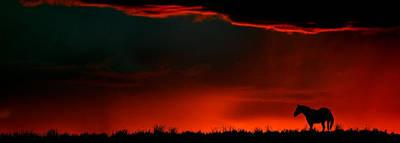 Animals Digital Art - Panoramic Horse Sunset by Mark Duffy