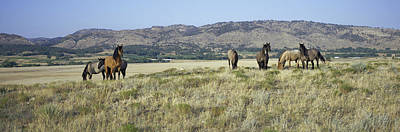 Panoramic Image Of Wild Horses Of Black Art Print