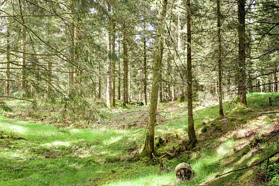 Photograph - Panoramic Spring English Forest A Stockhill Wood Somerset by Jacek Wojnarowski