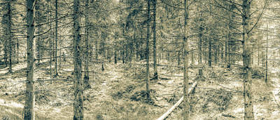 Photograph - Panoramic Spring English Forest C Stockhill Wood Somerset by Jacek Wojnarowski
