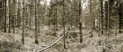 Photograph - Panoramic Spring English Forest D Stockhill Wood Somerset by Jacek Wojnarowski