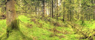 Photograph - Panoramic Spring English Forest E Stockhill Wood Somerset by Jacek Wojnarowski