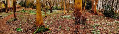 Photograph - Panoramic View Of Snowdrop Woods by Joan-Violet Stretch