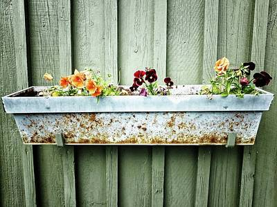Photograph - Pansies And Rust by Karen Stahlros
