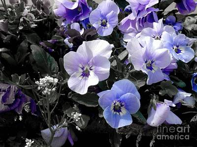 Photograph - Violas Ocean Dream by Joan-Violet Stretch