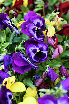 Food And Flowers Still Life Rights Managed Images - Pansies Royalty-Free Image by John Hoey