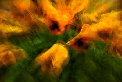 Photograph - Pansies by  Onyonet  Photo Studios