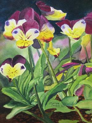 Pansies Art Print by Sharon Farber