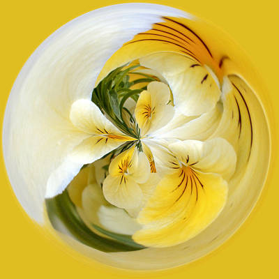 Photograph - Pansy Ball by James Steele