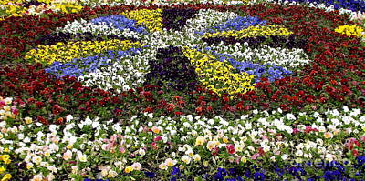 Photograph - Pansy Bed Highland Park Rochester New York by Rose Santuci-Sofranko