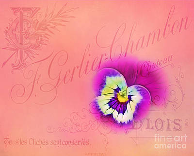 Photograph - Pansy Card by Judi Bagwell