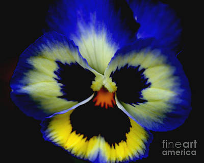 Pansy Face Art Print by Smilin Eyes  Treasures