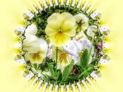 Photograph - Pansy Faces 2 by Nancy Pauling
