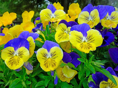 Painting - Pansy Faces - Spring Flowers by Rebecca Korpita