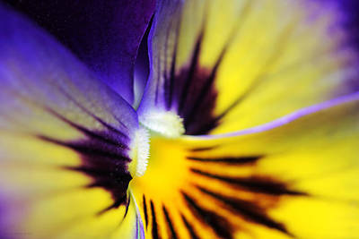 Photograph - Pansy Flower In Macro by Jennie Marie Schell