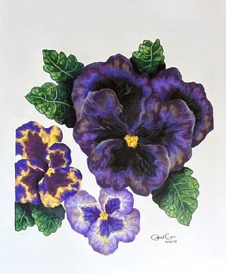 Drawing - Pansy by Gabriel Cajina