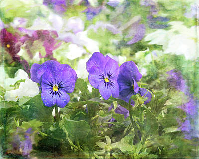 Photograph - Pansy Impressions by Kim Thompson